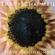 Tracy Chapman - New Beginning (CD)