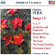 Biava Quartet - Complete Songs - Vol.1 (CD)