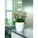 Lechuza - Classico Premium 28 LS - White Glossy
