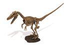Geoworld Jurassic Eggs Assembly Set - Velociraptor Skeleton