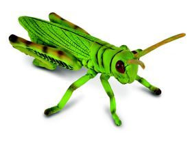 Collecta Insects-Grasshopper-M