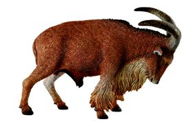 Collecta Wildlife-Barbary Sheep-L